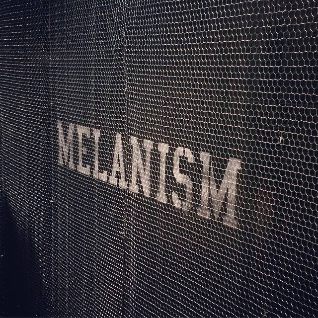 c_22_the POOL aoyama MELANISM