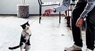 #06猫じゃらしで遊ぶ